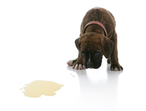 Natural-Dog-Stain-Removal