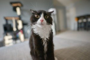 asheville pet odor removal