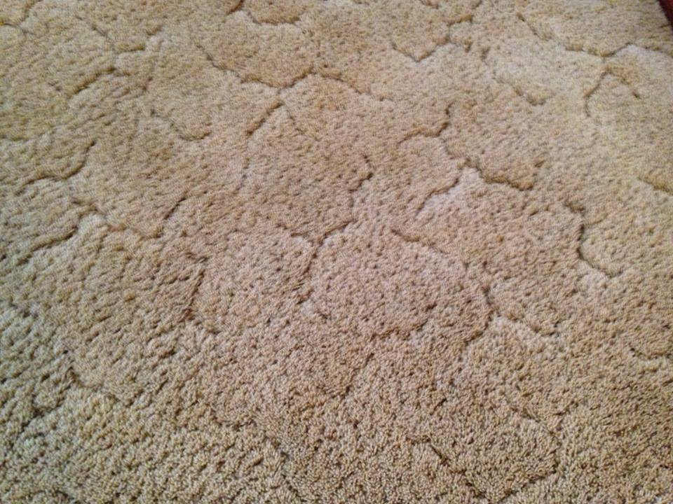 wnc carpet cleaning, asheville, carpet cleaning