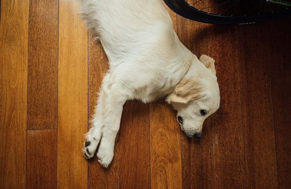 How To Safely Clean A Hardwood Floor Five Step Carpet Care